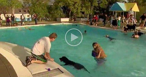 (Vídeo) Canadá abre piscinas para perros