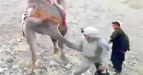 (Vídeo) Camello se enfrenta a soldado