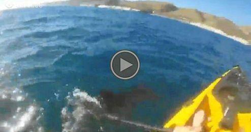 (Vídeo) Usa el remo para defenderse de un tiburón