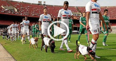 Imagen de los jugadores del Sao Paulo con los perros en el campo.
