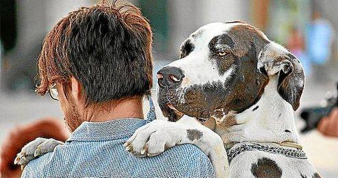 Un estudio demuestra la capacidad emocional de los perros.