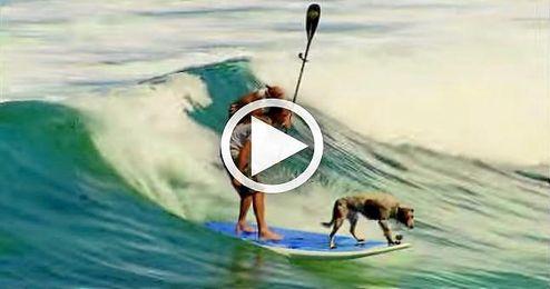 (VIDEO) El mejor amigo del hombre también puede surfear