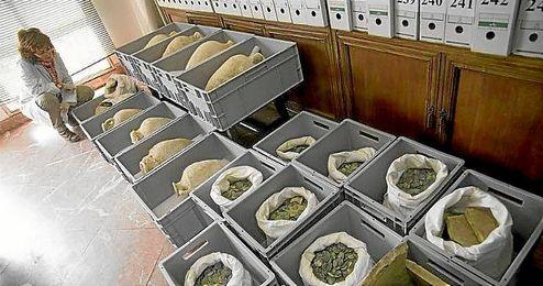Parte de las �nforas y monedas romanas halladas en Tomares