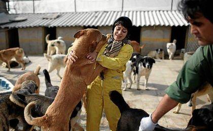 """Irán confisca perros por ser """"un símbolo de la vulgar cultura occidental""""."""
