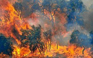 Un total de 18.851 hect�reas han ardido en Espa�a en agosto, m�s de la mitad de todo lo quemado en 2016