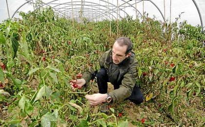 La Unión Europea contó el año pasado más de 11 millones de hectáreas dedicadas a la agricultura ´bio´.