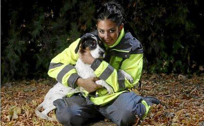 El Zoosanitario facilitó el año pasado 1.542 adopciones y la devolución de 261 animales a sus dueños
