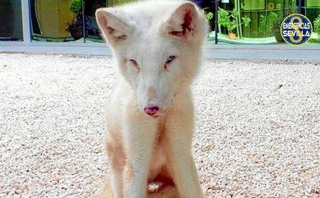 Estado en el que apareció el zorro ártico el año pasado.