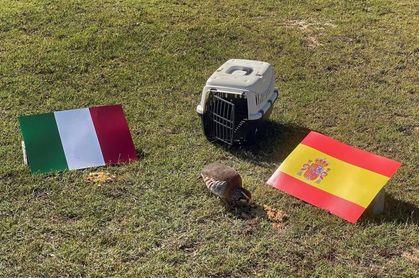 La perdiz roja 'Tako' pronostica en Valencia el pase de España a la final