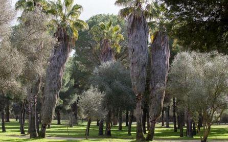 Parque Periurbano de la Corchuela, un entorno natural cercano